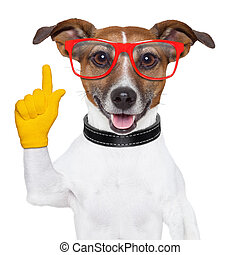 smart school dog - smart and clever dog isolated on white