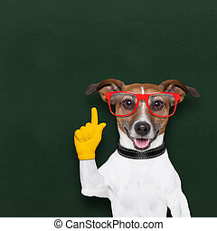 smart school dog - smart and clever dog and  blackboard