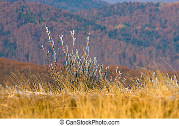 Autumn mountain in Bieszczady, Poland