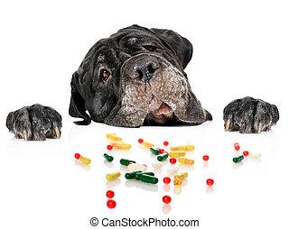 Dog and pills.