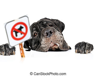 No pets sign. - Dog and no pets sign isolated over white.