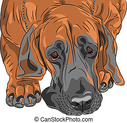 vector close-up sketch domestic dog Great Dane breed -...