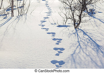 Hare trace in the snow in a forest glade. Winter Landscape