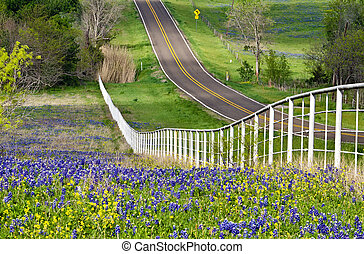 Texas bluebonnets along road side - Bluebonnets and yellow...