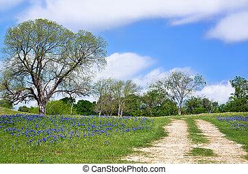 Texas bluebonnet vista