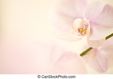 pink dendrobium orchid background. Carefully spotted and...