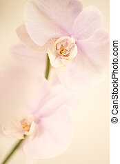pink dendrobium orchid background Carefully spotted and...