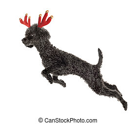 Rudolf the Reindeer - Rudolf the Black Nosed Reindeer. Black...