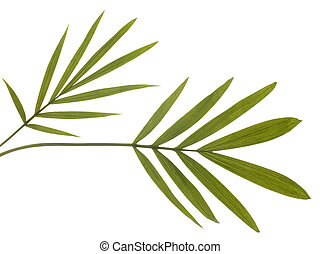 Green Bamboo Leaves Isolated on White. Super clean white...