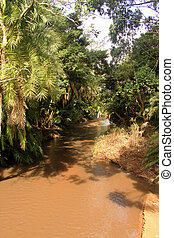 Muddy River Through Tropical Forest - Picture of Muddy River...
