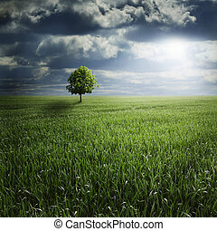 Lone Tree in Field with Storm - Lone tree standing in a...