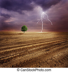 Lone tree and lightning - Lone tree on a plowed dirt field...