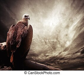 Eagle sitting on a log against stormy sky