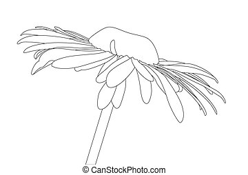 Chamomile - vector black outline Chamomile on white...
