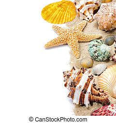 colorido, Conchas marinas, arena