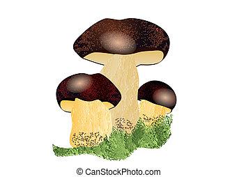 Boletus mushroom isolated on the white background