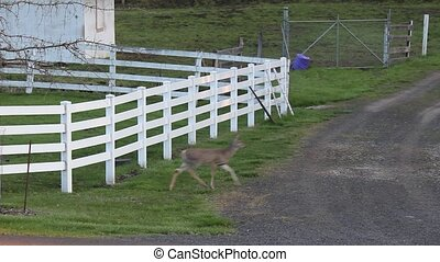 Whitetail Deer and Fence - These whitetail deer found a way...