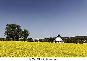 Timbered house with rape field in Lower Saxony, Germany,...