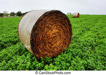 Hay Bales - Golden Hay Bales in the countryside on a perfect...