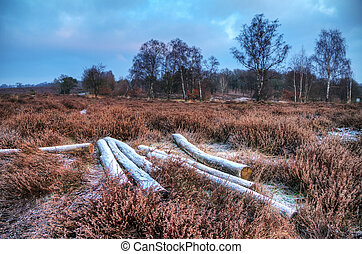 Winter heathland - Early, cold winter morning at the Posbank...
