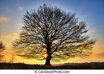 Big tree sunrise - Early, cold winter morning at the Posbank...