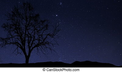 night sky stars tree time lapse - A time lapse of a starry...