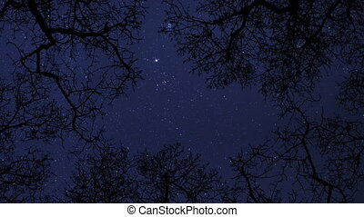 night sky stars trees time lapse - A time lapse of a starry...