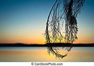 Silhouette of Reeds at Sunset in Lake