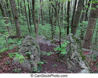 Appalachian Trail - Forest scene along the Appalachian Trail...
