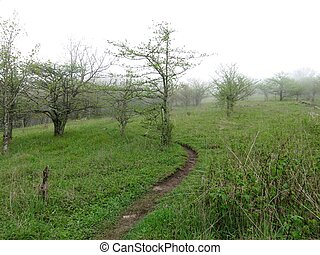 Appalachian Trail - Scene along the Appalachian Trail in...
