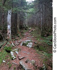 Appalachian Trail in Maine - Scene along the Appalachian...