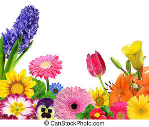 floral background isolated