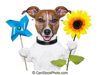 eco energy dog