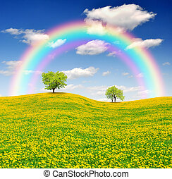 Spring tree on dandelions field with rainbow