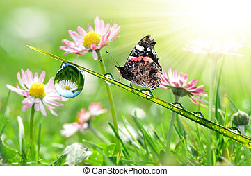 dew with butterfly - water drop on green grass with...