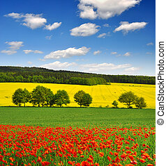 spring landscape with red poppy field in the Czech Republic