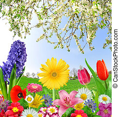 floral background from spring flowers