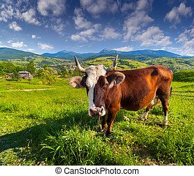 Cow pasture. Wide angle.