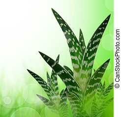 Aloe Vera on green background