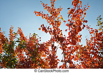 Autumn tree with red leafs