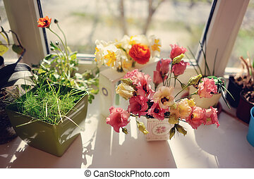 flowers on the windowsill - in the rays of sunlight on a...