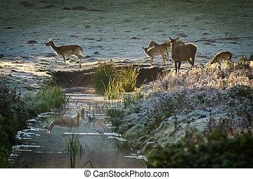 Herd of elk standing at the river on frozen meadow