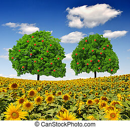 sunflower field - Apple trees on sunflower field