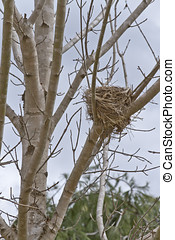 Birds Nest in a Tree - A birds nest sitting in a tree in...