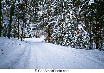 Snowy road in forest at winter