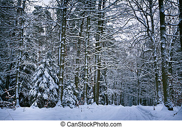 Snowy forest after whiteout in winter - Snowy forest after...