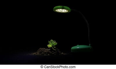 Young sprout and table lamp on a black background.