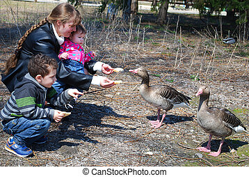 mother with her son and daughter in the park feed the geese