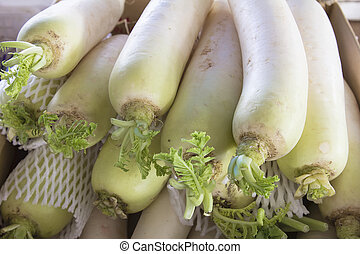 Daikon White Radish Closeup - Daikon East Asian White Radish...