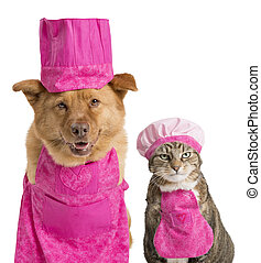Dog and cat ready for cooking - Dog and cat wearing chef...